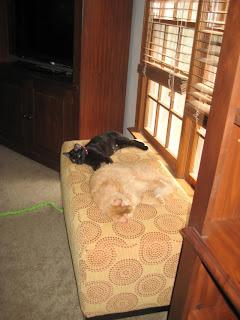 Lli and Dexter nap