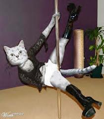 Pole Cat