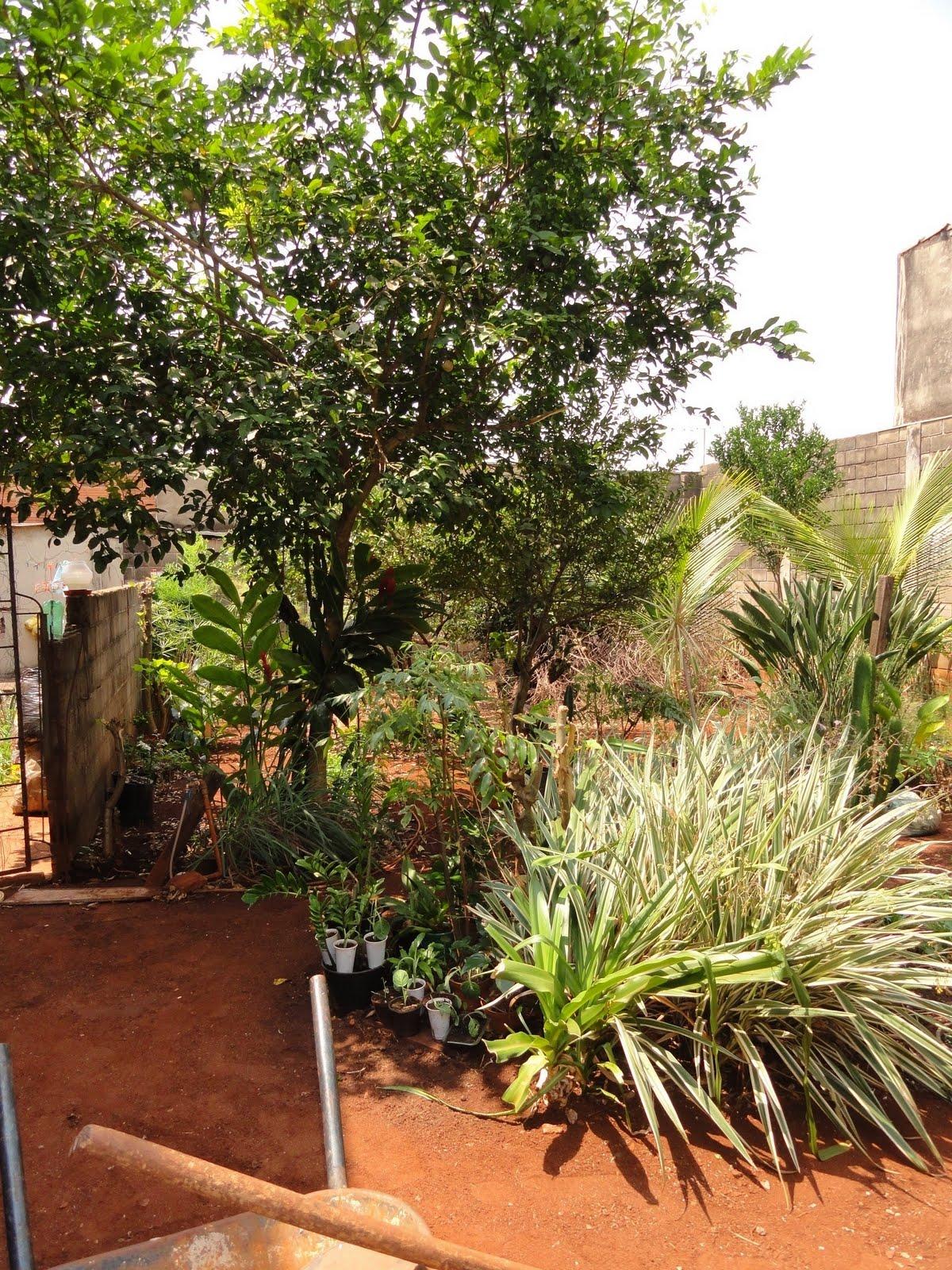jardim fundo quintal : jardim fundo quintal:Jardim em comum: Fundo de quintal