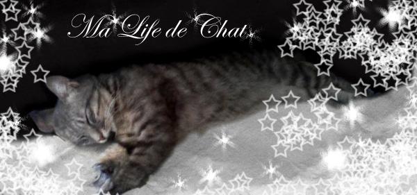 Ma life de chat
