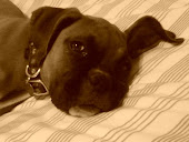 Our Sadie