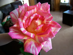 I grew this rose