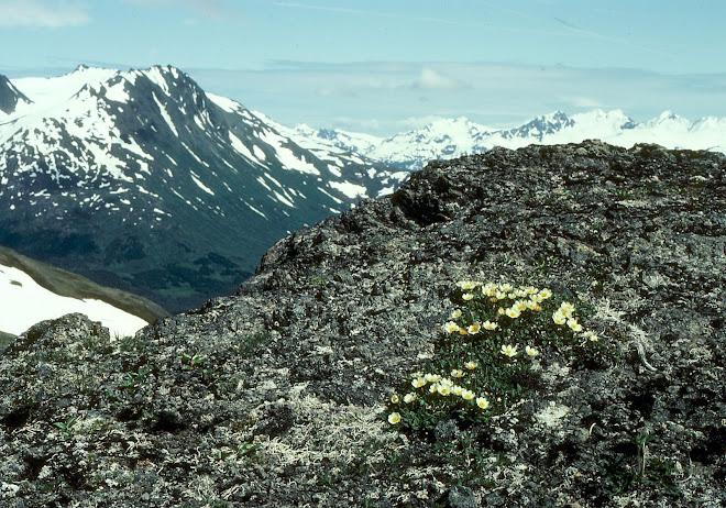 vista paronamica de la tundra