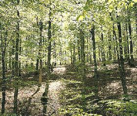 bosque caducifolico