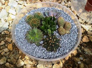 DIY : Cactus Terrarium