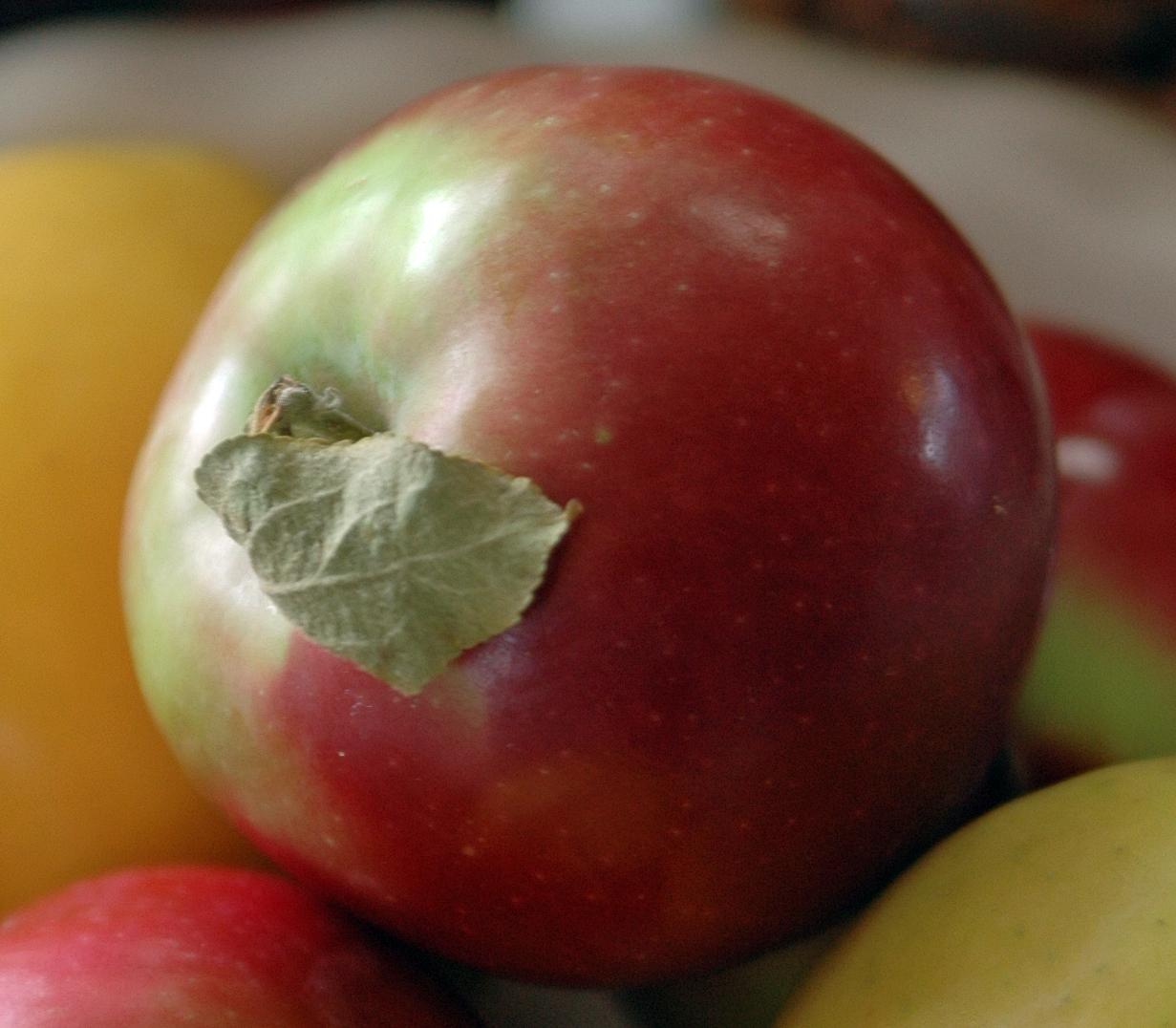 ... DANDELION HOUSE and GARDEN : Maple Apple CRANBERRY Oatmeal Crisp