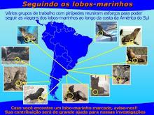 Red Latina de maración de pinnípedos