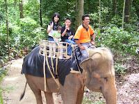 ❤曾经骑过大象xD❤