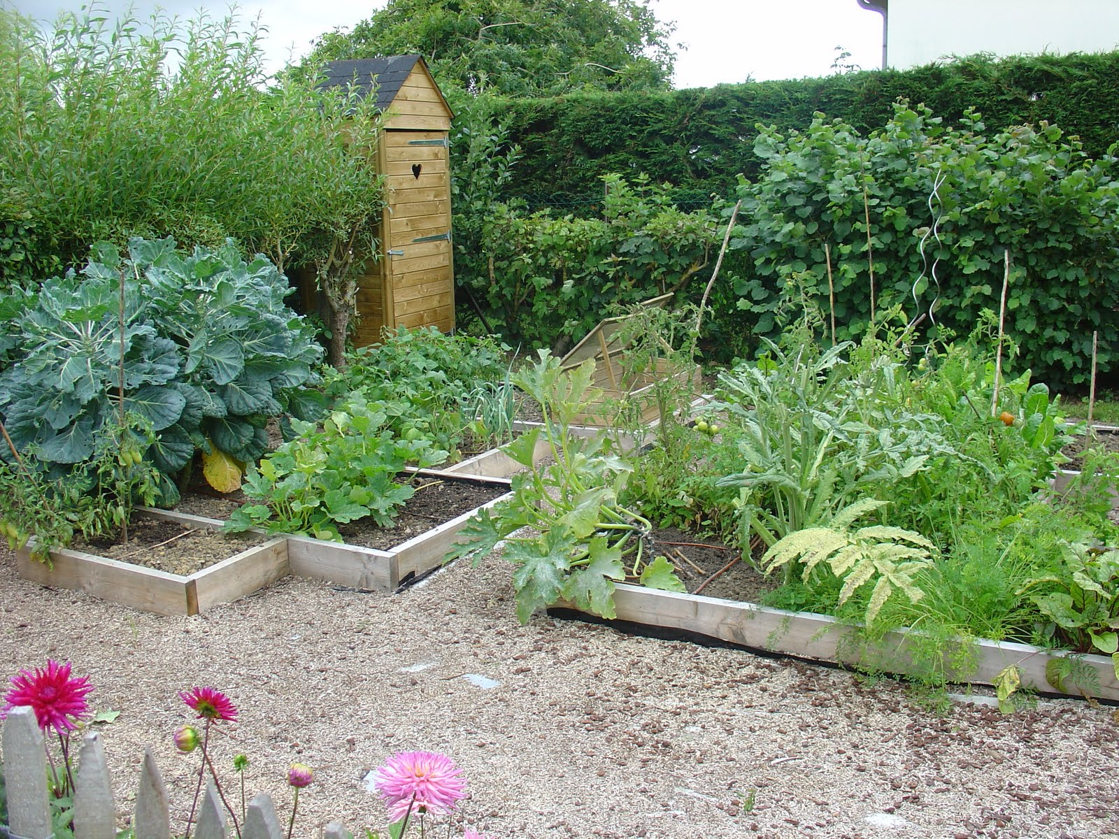 Planter des courgettes pour le ramdhan - Planter des courgettes en pot ...