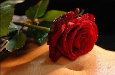 ljubavne slike download besplatne sličice ruža