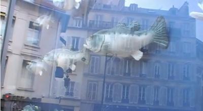 25 poissons shakent leur body pour Findus (vidéo)