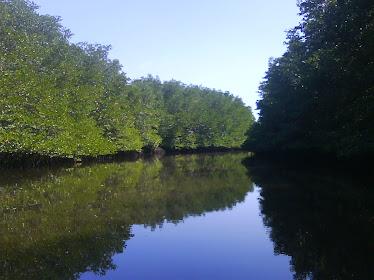 mangrove jbt