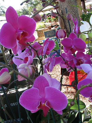 winter park orchids