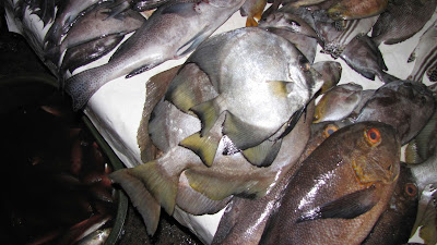 longfin spadefish fish market