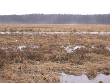 Marshland