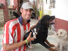 Rottweiler & Chiuahua