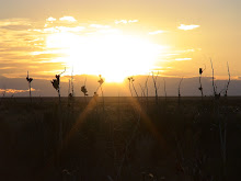 Colorado Plains Sunset