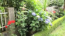 Spanish Summer Garden