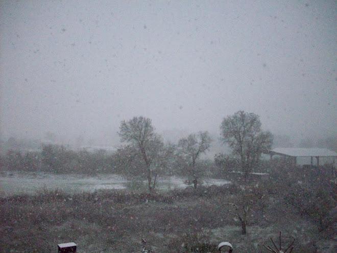 14 DE DESEMBRE 2009