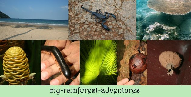 My rainforest adventures in Malaysia
