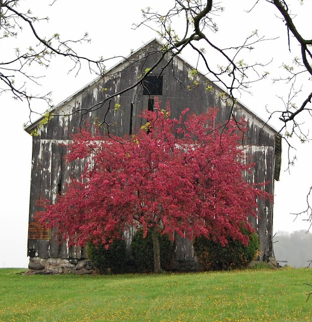Synch-ro-ni-zing: Why Are Barns Painted Red? Or Sometimes
