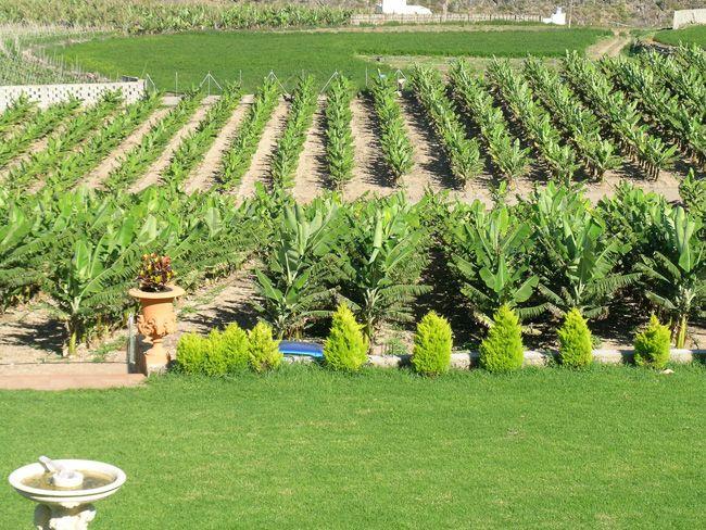 Revista jard n preparaci n del terreno para plantaci n for Preparacion de jardines