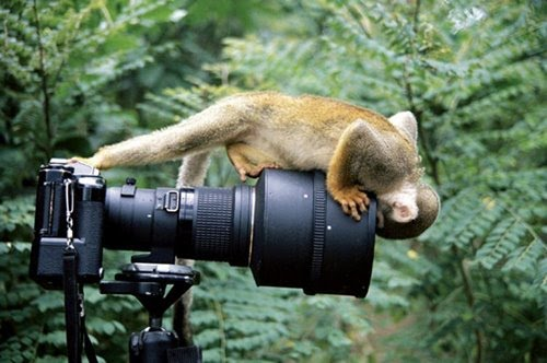 Lens+Monkey - Looking into the horizon - Photos Unlimited
