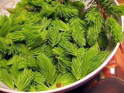 siropul din muguri de brad-7 ron/100 ml