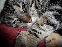 Była sobie kotka Zuzia.