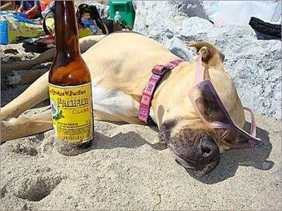 funny dog drunk