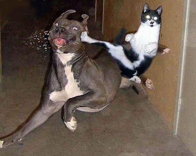 funny dog cat fight ninja style picture