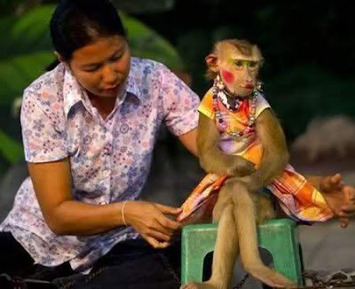 funny animal pose monkey with hot girl