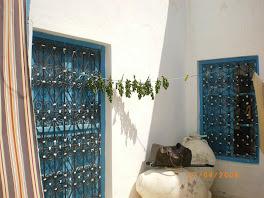 Le soleil inonde la cour de la maison de Nabeul, la menthe séche sur la corde, les jarres sont là!