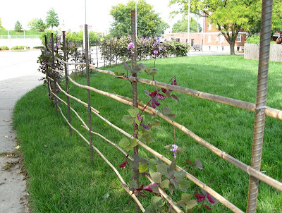 Site Blogspot  Garden Fencing Designs on Hyacinth Beans And A Bottle Tree And An Interesting Bamboo Fence