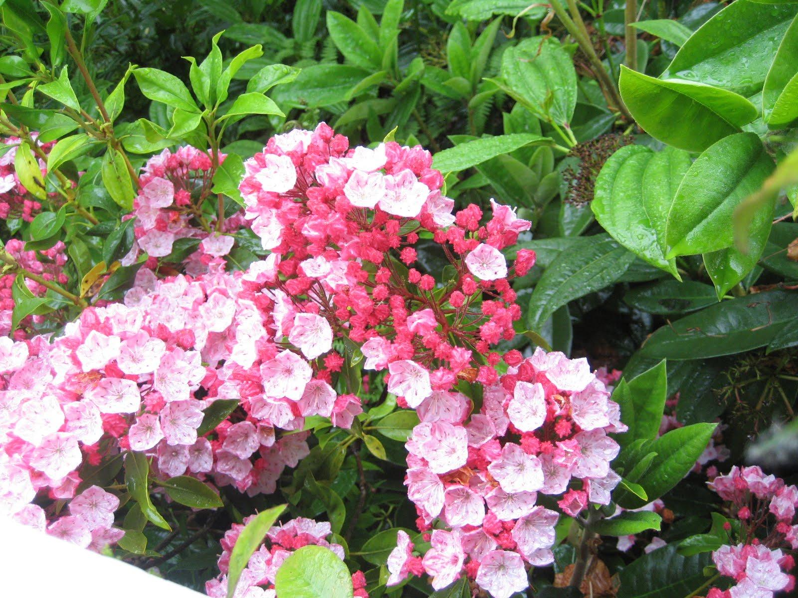 Seasons In My Garden June Flowers