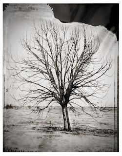 Type 55 Polaroid - Dead Tree at Utah Lake - Brandon Allen