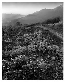 Squaw Peak - Provo, Utah - Brandon Allen - Large Format Black and White