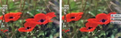 Vectormagic poppy comparison
