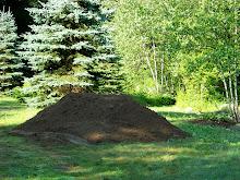 Ummmmmmmmmmmm!  Good Dirt!