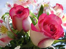 Rosas para mis padres