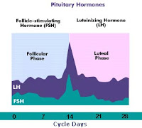 FSH:LH ratio significantly predicts IVF success, cancellation risk