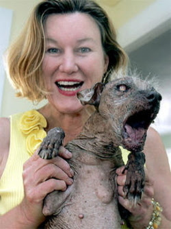 world's ugliest dog winner