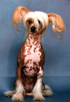 world's ugliest dog breed