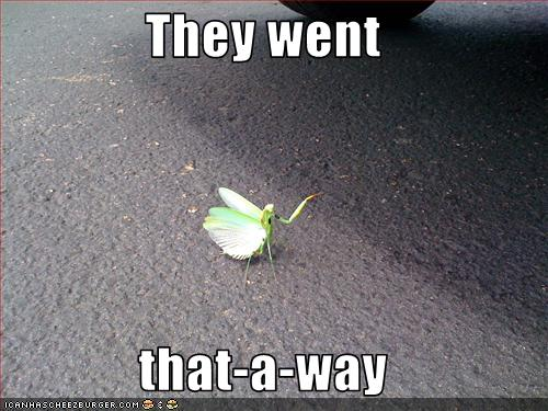 [funny-pictures-mantis-gives-directions.jpg]