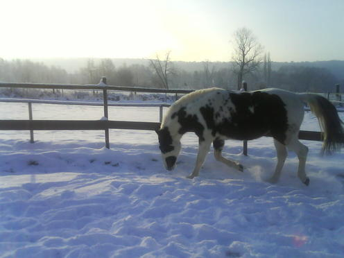 Billy Kris, cheval d'indien Polonais en Normandie - Page 3 DSC00610