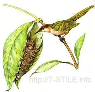 Гнездо птицы-портихи