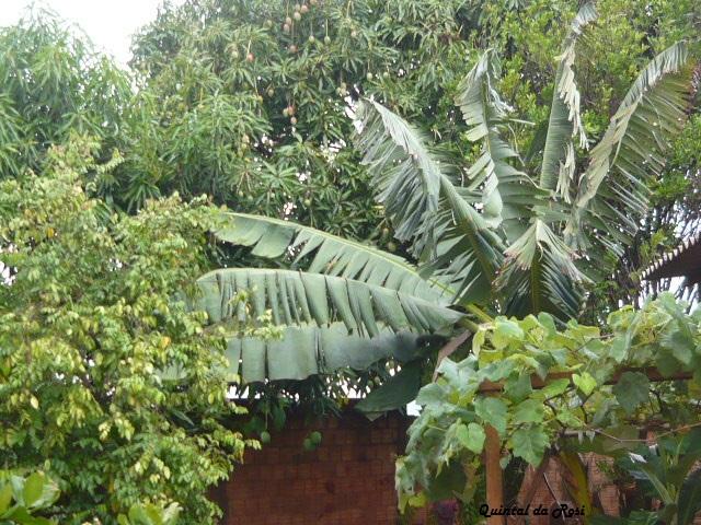 meu quintal meu jardim : meu quintal meu jardim:MEU CANTINHO VERDE: FOTOGRAFANDO MEU QUINTAL