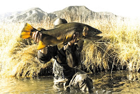 16lb Madison River Brown