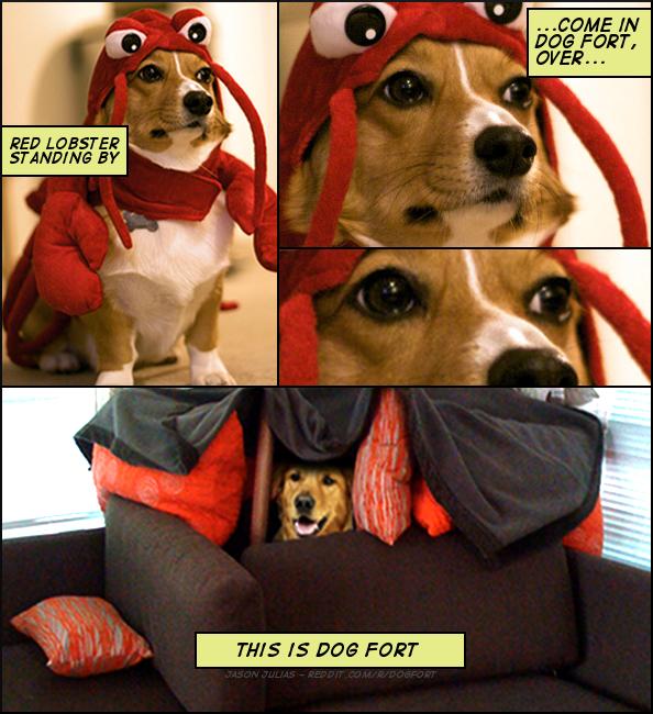 Dog Fort Red Lobster