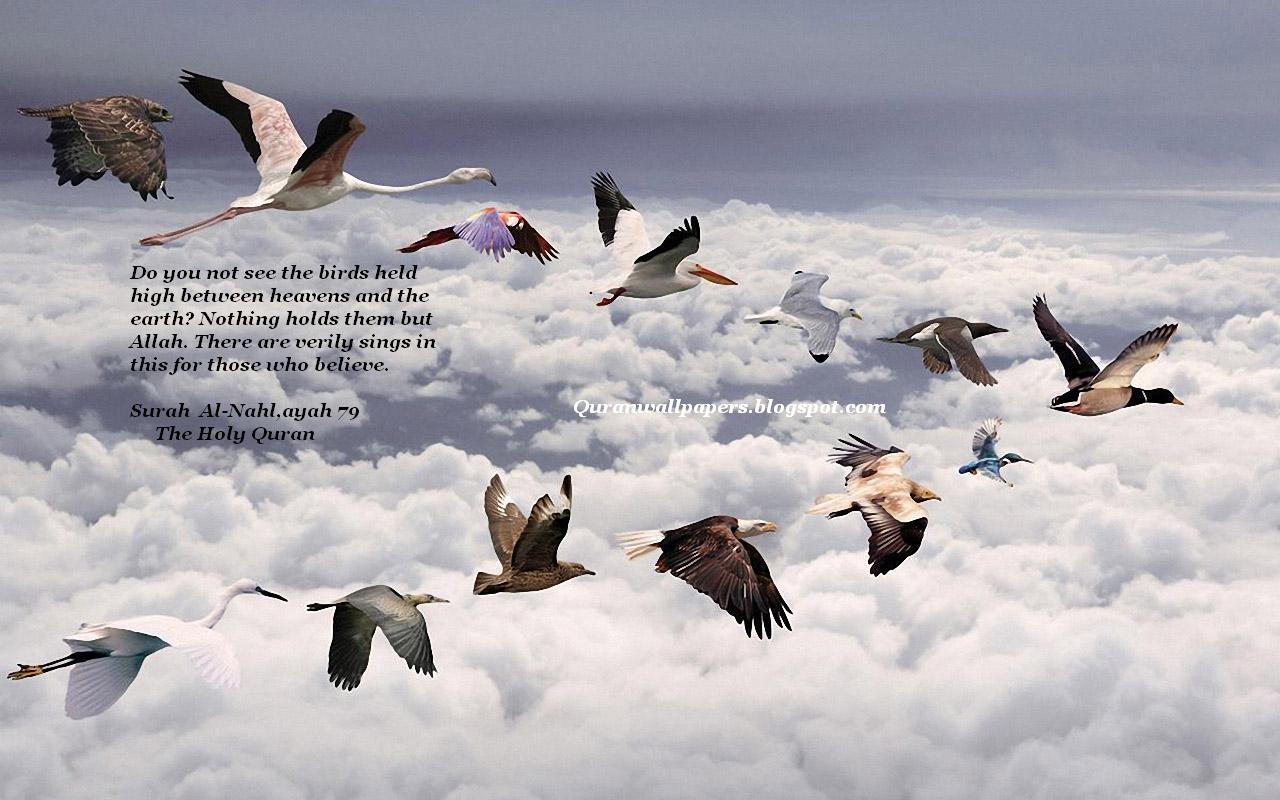 Wallpapers iphone quran - Http 2 Bp Blogspot Com _ichehk2afl0 Tugkqdor Quran Verse About Birds Islamic Wallpaper